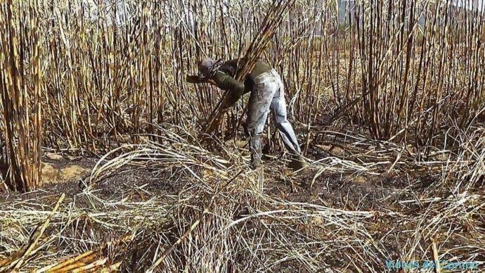 Solo el 20% de la caña de azúcar se corta sin quemar en El Salvador